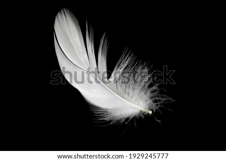 white duck feathers isolated on black background Royalty-Free Stock Photo #1929245777