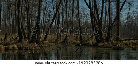 PRIMARY SWAMP FOREST. NATURE RESERVE. BARYCZ VALLEY, POLAND. Royalty-Free Stock Photo #1929283286
