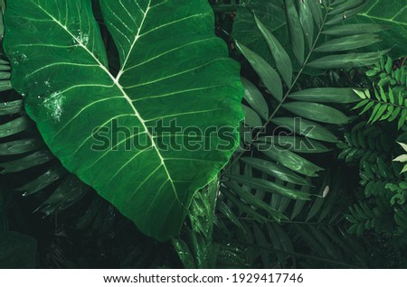 big green leave natural dew Royalty-Free Stock Photo #1929417746