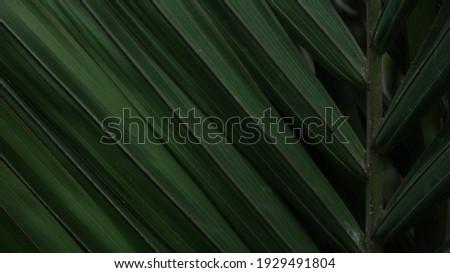 Foliage dark green eco fresh flora closeup leaves Brazil rainforest palm tree exotic background beautiful creative tropic wallpaper  Royalty-Free Stock Photo #1929491804