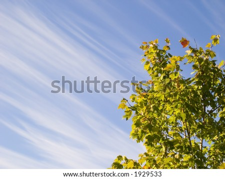 Blue sky with streaky clouds and green leaves of tree top. #1929533