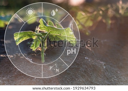 Sprout crop plant grow on field with cyber display of technological smart farming 4.0. Monitoring the growth of plants. Innovation and modern technology. Royalty-Free Stock Photo #1929634793