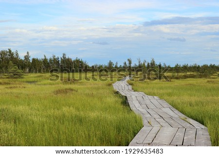 This wooden deck is an ecological trail for tourists that leads through a natural riding swamp. It offers beautiful views of the amazing nature of the swamps in Eastern Europe Royalty-Free Stock Photo #1929635483
