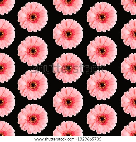 Seamless pattern of pink gerbera on a Black. Germini photo converted into a seamless pattern