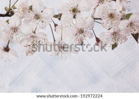 Vintage flowers postcard. Floral background with artistic texture. Cherry blossoms. Spring. #192972224