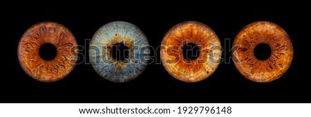 Close up of eye iris on black background, macro, photography