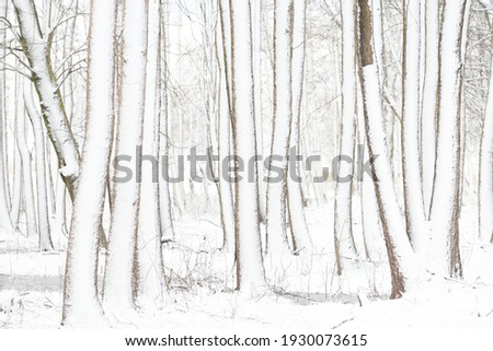 Ice road through snow-covered forest (park) after a blizzard on a clear day. Trees covered with hoarfrost. Winter wonderland. Idyllic rural scene. Nature, seasons, ecotourism, christmas vacations Royalty-Free Stock Photo #1930073615