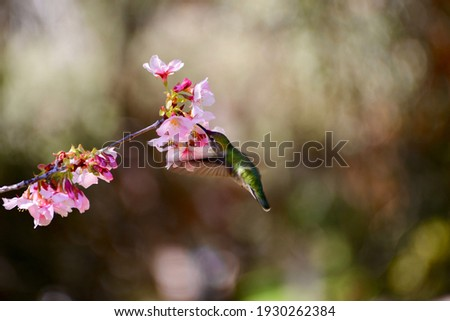 Hummingbirds can stay still in the air for a short period of time, making them a favorite photo subject.  You can clearly photograph the graceful figure of the hummingbird and the colorful flowers.