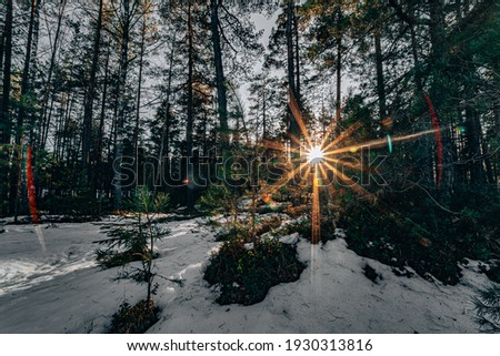 Sunset in the wood between the trees strains in winter period. Sunset in the forest Royalty-Free Stock Photo #1930313816