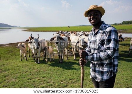 Africa American man feed and care the subsistence of cows in local farm near river and using a wood for control livestock. A farmer is a profession that requires patience and diligence Royalty-Free Stock Photo #1930819823