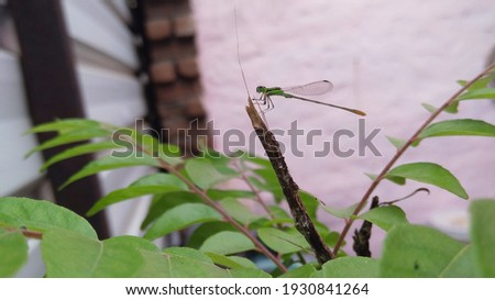 a picture of dragon fly captured while it was sitting on plant of curry.