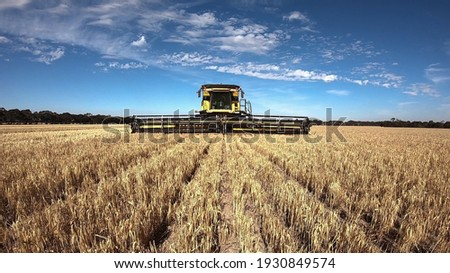 New Holland Combine Harvester Harvesting Barley in Outback Western Australia with a big blue sky and white clouds. Front view of the agricultural machine in action. Royalty-Free Stock Photo #1930849574