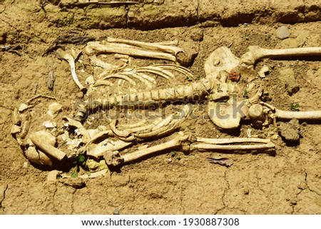 Human skeleton in an archaeological dig  Royalty-Free Stock Photo #1930887308