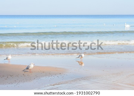 Seashore with soft waves. Seagulls on deserted beach. Selective focus. Royalty-Free Stock Photo #1931002790