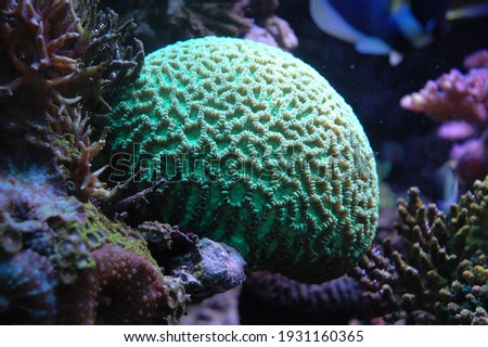 beautiful green coral head at a reef Royalty-Free Stock Photo #1931160365