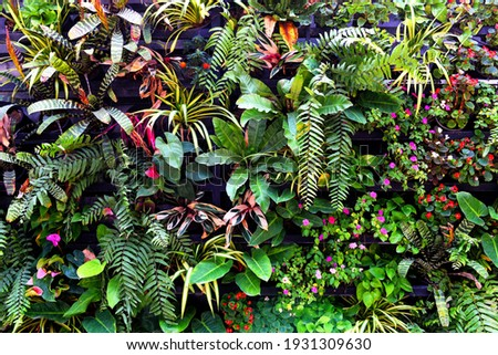 Plant wall with lush green colors, variety plant forest garden on walls orchids various fern leaves jungle palm and flower decorate in the garden rainforest background Royalty-Free Stock Photo #1931309630