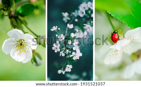 Set of mobile device, phone or smartphone wallpapers, spring seasonal floral background. Collection of three natural pictures with flowers and branches.