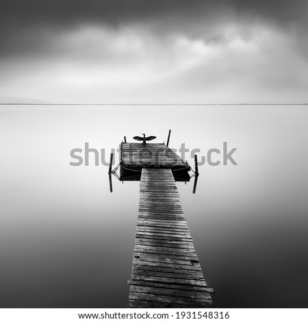 Fine art, black and white landscape photograph with birds in misty lakes Royalty-Free Stock Photo #1931548316