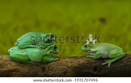 photo This little conversation between the frog and the mantis is great for you to display in the living room of your house