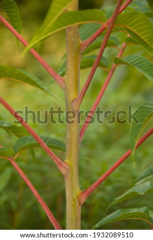 Toon plant growing in the garden Royalty-Free Stock Photo #1932089510
