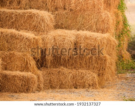 Haystack, a bale of hay group. Agriculture farm and farming symbol of harvest time with dry grass (hay),  hay pile of dried grass hay straw.  Royalty-Free Stock Photo #1932137327