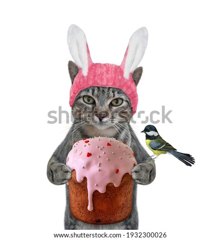 A gray cat in a pink easter bunny hat is holding a easter cake. White background. Isolated.