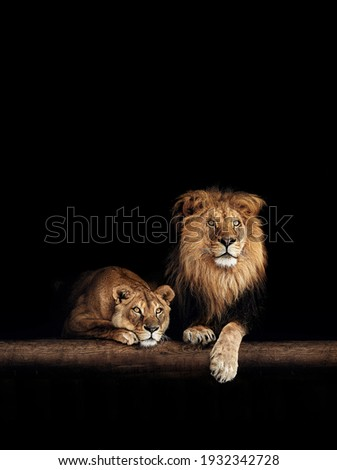 Lion and lioness, animals family. Portrait in the dark. Royalty-Free Stock Photo #1932342728