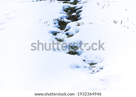 A snow-covered landscape and a path with green grass breaking through from under the snow. First snow in winter or thaw in early spring. A snow-covered path in the park. Thaw. High quality photo