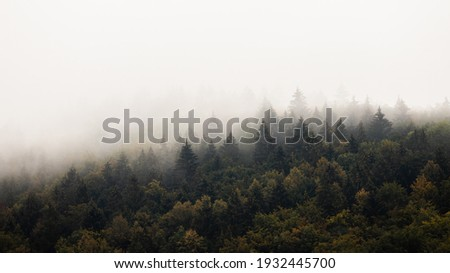 Dense forest with mist in morning with copyspace. Coniferous trees scenery in mysterious haze with space for text. Landscape scene with moody atmosphere. Royalty-Free Stock Photo #1932445700