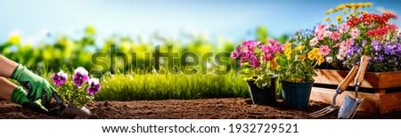 Gardener planting flowers in the garden Royalty-Free Stock Photo #1932729521