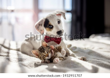 Puppy and kitten hugging on the bed as a best friends Royalty-Free Stock Photo #1932951707