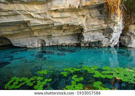 Aquatic plants and rock in the Pratinha River, Iraquara, BA, Brazil on June 8, 2007. The river is a true aquatic paradise with flooded caves and natural pools. Royalty-Free Stock Photo #1933057586