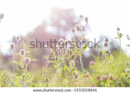 Sunny day on the flowers meadow. Beautiful natural background. Royalty-Free Stock Photo #1933058846