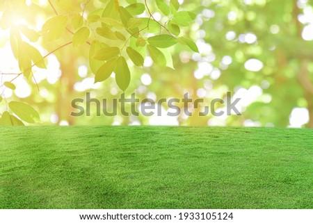 Green grass field over bokeh nature background.