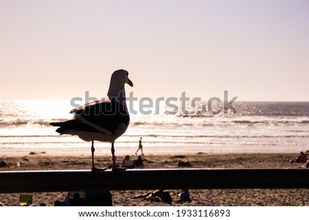 seagull overlooking the sea from a Californian beach Royalty-Free Stock Photo #1933116893