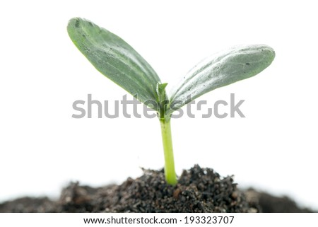 Growing plant isolated with white background #193323707