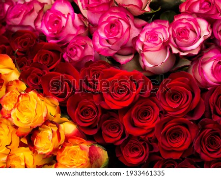 Yellow and red and pink roses background. Freshness bunch Royalty-Free Stock Photo #1933461335