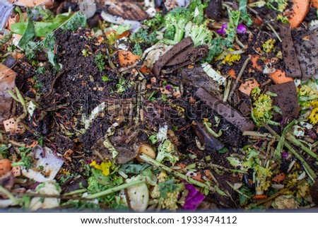 A close up view of worms put into a new feeding tray with fresh food and bedding material in an indoor vermicomposter. Worm composter are a perfect solution in an apartment to process food waste
