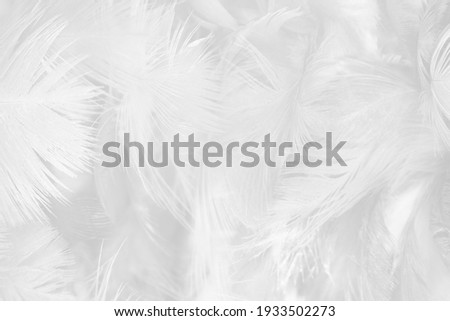 white feather wooly pattern texture background Royalty-Free Stock Photo #1933502273