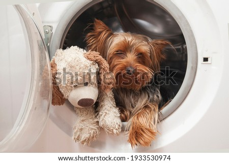 Joking picture, washing a small dog in a place with a toy dog in the washing machine