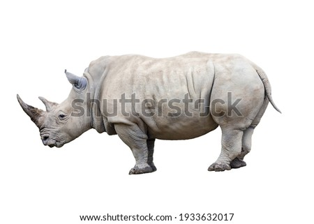 Rhino rhinoceros standing side view isolated on white background. Royalty-Free Stock Photo #1933632017