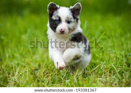 Border collie dog in a spring meadow #193381367