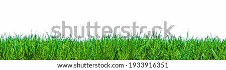 Close up of green blades of grass against a white background Royalty-Free Stock Photo #1933916351