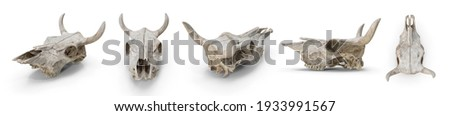Head cow skull with horns. Skull dead buffalo cattle stump, desert wildlife. Isolated white background 3d illustration different angle view realistic set