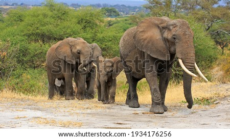 Herd of Elephants in Africa Royalty-Free Stock Photo #1934176256
