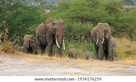 Herd of Elephants in Africa Royalty-Free Stock Photo #1934176259