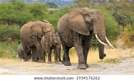 Herd of Elephants in Africa Royalty-Free Stock Photo #1934176262