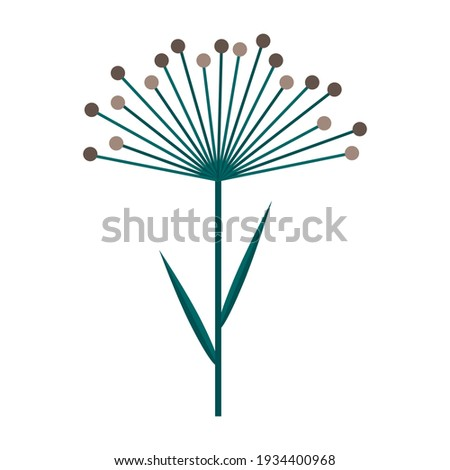 Umbrella of dill or cereal plant. Simple minimalistic green branch with leaves and brown flowers. Nature collection of elegant plants for seasonal decoration . Stylized icons of botany. Stock vector Royalty-Free Stock Photo #1934400968