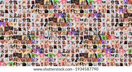 Stylish adorable dogs and cats posing. Cute pets happy. The different purebred puppies and cats. Art collage isolated on multicolored studio background. Front view, modern design. Collage. Royalty-Free Stock Photo #1934587790
