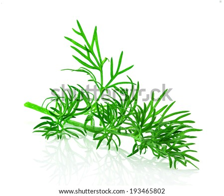 dill herb leaf isolated #193465802